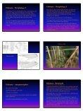 Ephemoptera and Odonata - Page 3