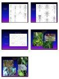 Ephemoptera and Odonata - Page 4
