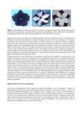 Silenciamiento génico en plantas - ArgenBio - Page 2