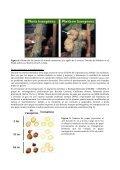 Silenciamiento génico en plantas - ArgenBio - Page 6