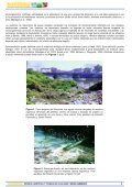 Más información sobre biorremediación - ArgenBio - Page 2