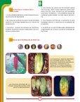 Reconocimiento y control de la Monilia del cacao Reconocimiento y ... - Page 2