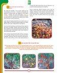 Reconocimiento y control de la Monilia del cacao Reconocimiento y ... - Page 4