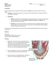 Cell Cycle Lab.pdf