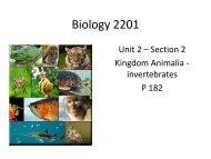 9 Animals Invertebrates.pdf