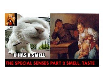 special senses 2 - Sinoe medical homepage.