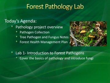 Indirect host effect on ectomycorrhizal fungi: Leaf fall and litter ...