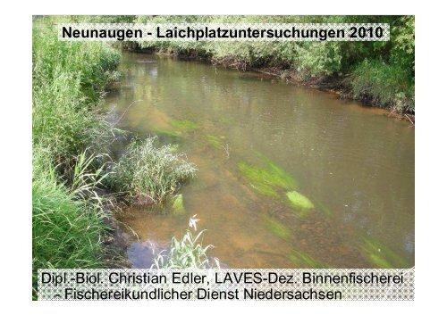 C. Neunaugen-LP 2010 - Wanderfische