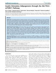 Insulin Stimulates Adipogenesis through the Akt-TSC2- mTORC1 ...