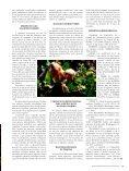 ALGODÃO COLORIDO - Biotecnologia - Page 4