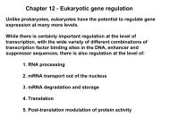 Chapter 12 - Eukaryotic gene regulation