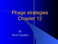 Phage strategies Chapter 12