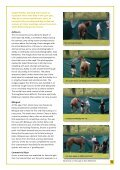 download report (pdf) - Race Horse Death Watch - Page 5