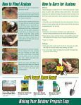 Azaleas - Marvin's - Page 2
