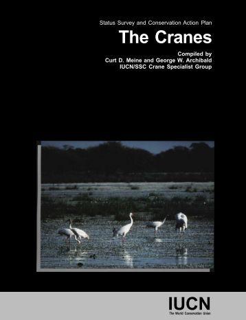 The Cranes IUCN
