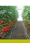 Catalog Syngenta seminte ardei, tomate, cornison - ecoplant.ro - Page 2