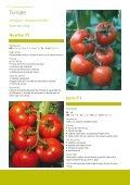 Catalog Syngenta seminte ardei, tomate, cornison - ecoplant.ro - Page 4