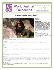 CHIMPANZEE FACT SHEET - World Animal Foundation