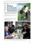 Plastic i færøske mallemukkers fødeindtagelse - Page 4