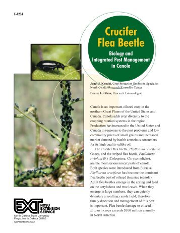 Crucifer Flea Beetle Biology and Integrated Pest Management in ...