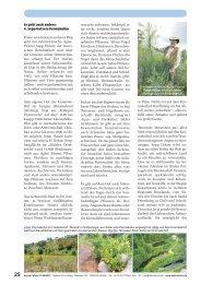 Depesche - mehr wissen - besser leben (Seite 25-36