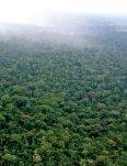 guia Seja Legal - WWF Brasil - Page 3