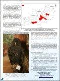 Novos registros de Strix huhula - Atualidades Ornitológicas - Page 2