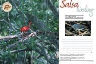 Salsa birding