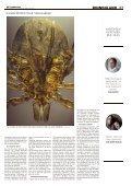 Ziekte-van-Lyme - Page 2