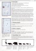 Et hefte til hjelp i bestemmelse av store rovdyr - Page 4