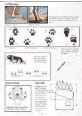 Et hefte til hjelp i bestemmelse av store rovdyr - Page 5