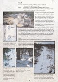 Et hefte til hjelp i bestemmelse av store rovdyr - Page 6