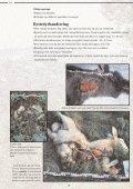 Et hefte til hjelp i bestemmelse av store rovdyr - Page 7