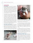 Getting the Facts About Cat Law - American Bird Conservancy - Page 2