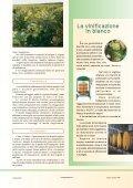 Bianchi di Puglia, vini da riscoprire - Page 4