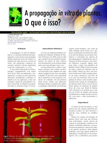 Propagação In Vitro - Biotecnologia