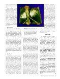 Propagação In Vitro - Biotecnologia - Page 6