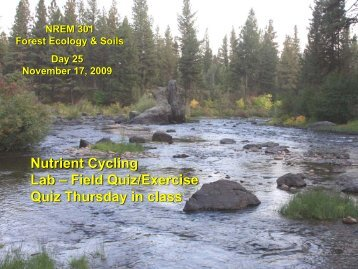 11-17-09 Nutrient Cycling