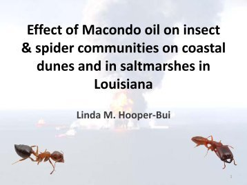 Effects of oil pollution on ant community on coastal dunes in Louisiana
