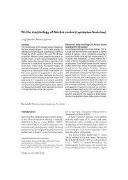 On the morphology of Noctua comes (Lepidoptera Noctuidae) - Inea