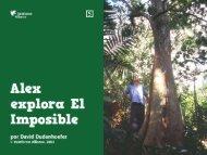 zopilote rey - Rainforest Alliance