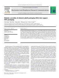 Modular assembly of chimeric phi29 packaging RNAs that support ...