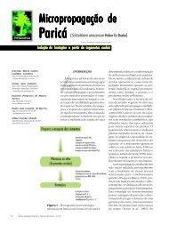 Micropropagação de - Biotecnologia