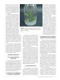 Micropropagação de - Biotecnologia - Page 2
