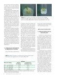 Micropropagação de - Biotecnologia - Page 3