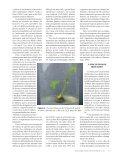 Micropropagação de - Biotecnologia - Page 4