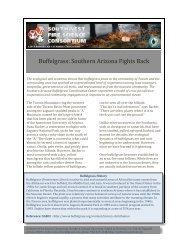 Buffelgrass - Southwest Fire Science Consortium