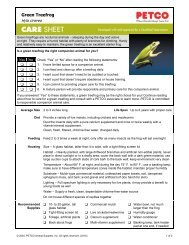 Green Treefrog - Petco