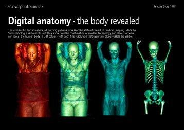 Kabbalah The Anatomy Of The Body Of God Pdf
