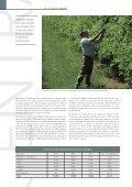estructura de producción de la fruta dulce en ... - Cortes de Aragón - Page 3